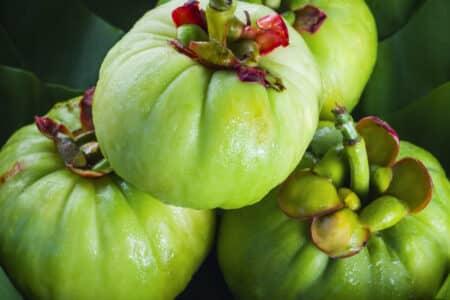 Fruto da planta Garcinia cambogia
